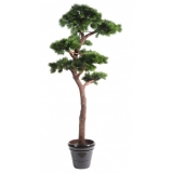 BOROVICE BONSAI, 220cm