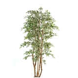 FICUS MULTITREE NATASJA green/ cream, 180cm