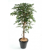 FICUS TRONC SIMPLE GF, 120cm