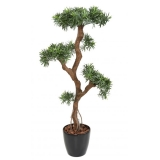 PODOCARPUS CLOUD UV, 135cm