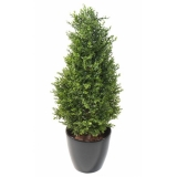 BUXUS RED DAY TOPIARY UV, 95cm
