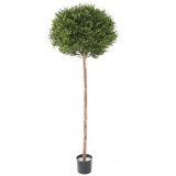 BUXUS KOULE RED DAY ROD UV, 170cm