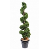 BUXUS SPIRAL NEW, 140cm