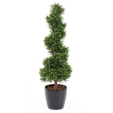 BUXUS SPIRAL NEW, 150cm