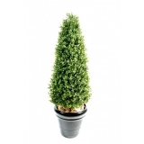 BUXUS TOPIARY NEW, 130cm