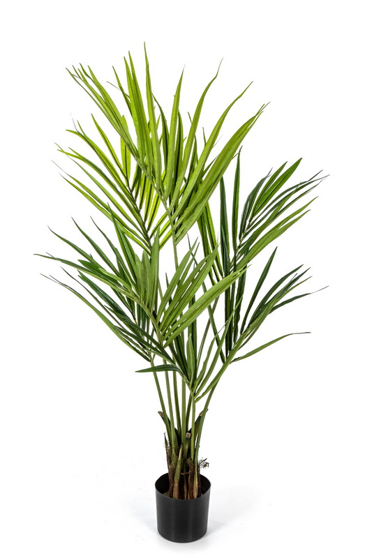 NATURAL KENTIA PALMA, 140cm