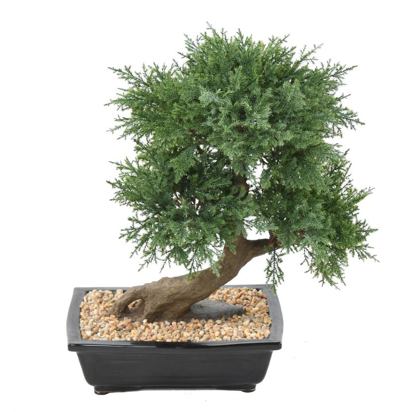 JUNIPERUS BONSAI, 55cm