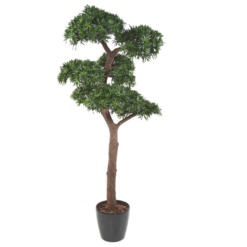 PODOCARPUS BONSAI UV, 210cm