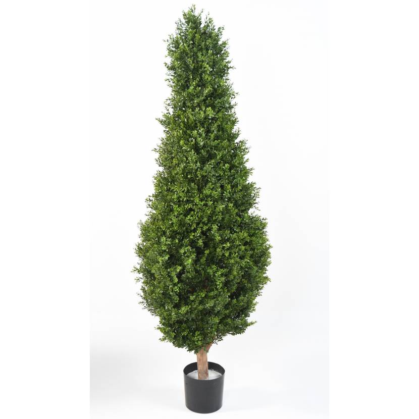 BUXUS RED DAY TOPIARY UV, 185cm