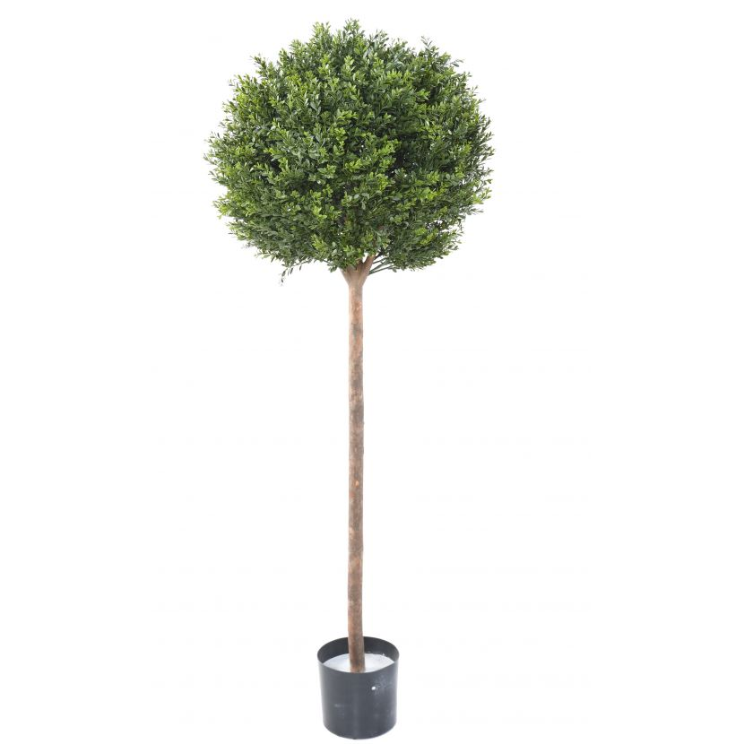 BUXUS KOULE RED DAY ROD UV, 140cm