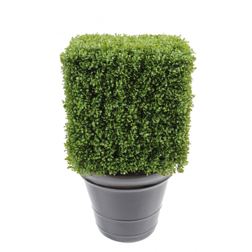 BUXUS REGULAR EDGE KEŘ, 65cm