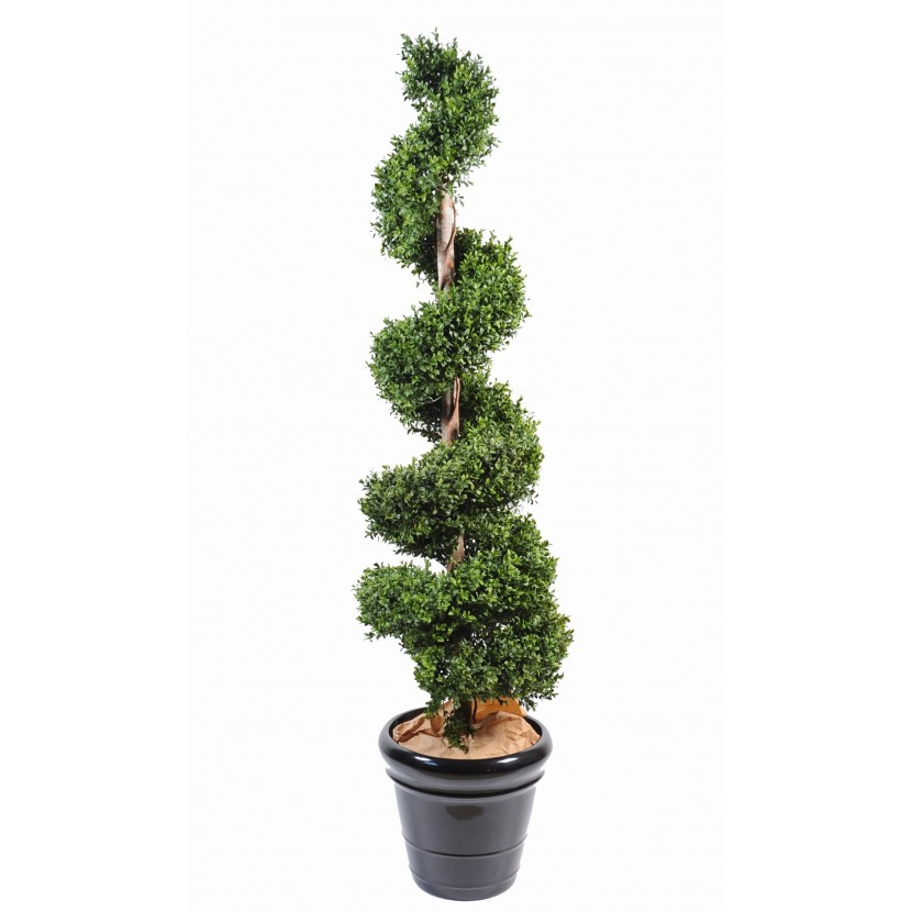 BUXUS SPIRAL NEW, 180cm