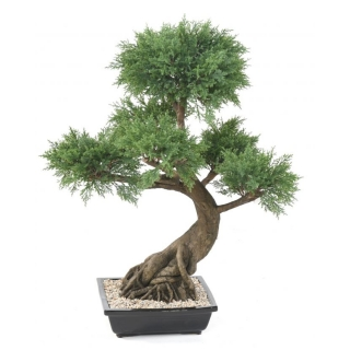 JUNIPERUS BONSAI, 100cm
