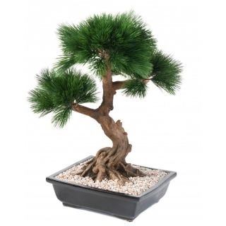 BOROVICE BONSAI, 70cm